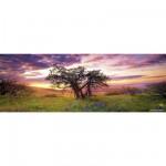 Puzzle 75 pièces panoramique Edition Alexander Humboldt : Oak Tree