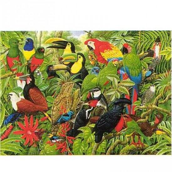 Puzzle 1000 pièces - Les oiseaux du Costa Rica - Hamilton-CR2/1028