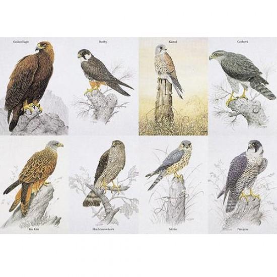 Puzzle 1000 pièces - Oiseaux de proies anglais - Hamilton-BP1/1011