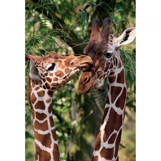 Puzzle 1000 pièces : Girafes - Jumbo-18340
