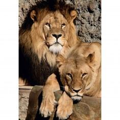 Puzzle 1000 pièces : Lions
