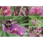 Puzzle 1000 pièces : Orchidées