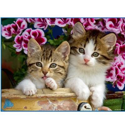 Mb Jeux puzzle 1000 pièces - chatons dans un pot en grès