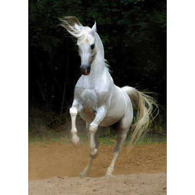 Dtoys Puzzle 1000 pièces - chevaux : cheval blanc