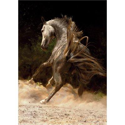 Dtoys Puzzle 1000 pièces - chevaux : cheval dans la poussière