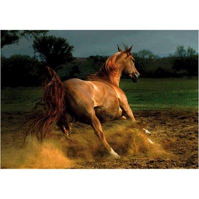 Dtoys Puzzle 1000 pièces - chevaux : cheval chestnut