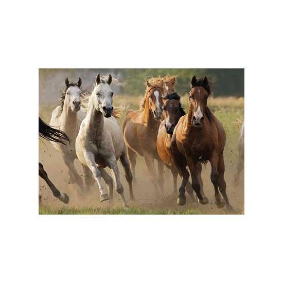Puzzle 1000 pièces - Horde de chevaux sauvages - Nathan-Ravensburger-87561