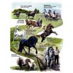 Puzzle 150 pièces maxi : Mes amis les chevaux