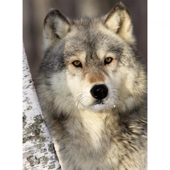 Puzzle 500 pièces : Le regard du loup - Nathan-Ravensburger-87142