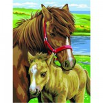 Peinture au numéro Débutants Duo : Chevaux