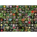 Puzzle 1000 pièces : Floraison