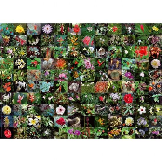 Puzzle 1000 pièces : Floraison - Piatnik-5397