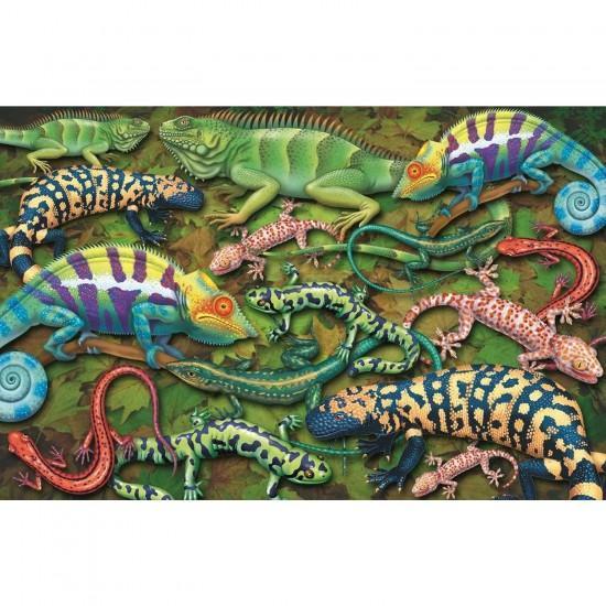 Puzzle 1000 pièces - Lézards et Salamandres - Piatnik-5553