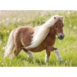 Puzzle 100 pièces XXL : Petit poney