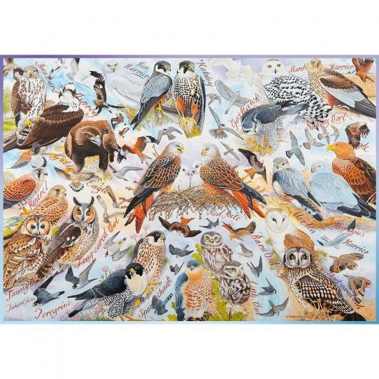 Puzzle 1000 pièces : Oiseaux de proie - Ravensburger-19559