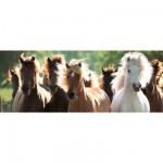 Puzzle 1000 pièces panoramique : Chevaux sauvages