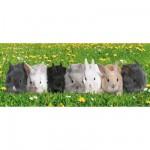 Puzzle 200 pièces XXL panoramique - Parade des lapins