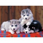 Puzzle 200 pièces XXL : Mignons huskies