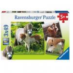 Puzzle 3 x 49 pièces : Mes amis poneys