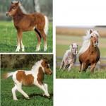 Puzzle 3 x 49 pièces - Les chevaux