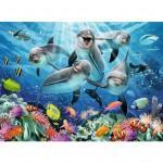 Puzzle 500 pièces : Dauphins sur le récif de corail