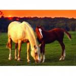 Puzzle 500 pièces : Jolis chevaux