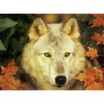 Puzzle 500 pièces : Loup mystérieux