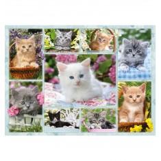 Puzzle 500 pièces : Pêle mêle de chatons