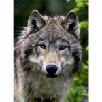 Puzzle 500 pièces : Portrait de loup