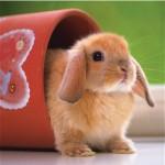 Puzzle 500 pièces - Mignon petit lapin