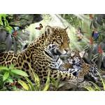 Puzzle 500 pièces : Bébé jaguar