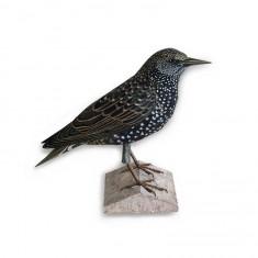 Maquette en carton : Animal : Oiseau Starling