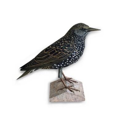 Maquette en carton : Animal : Oiseau Starling - Schreiber-Bogen-A49