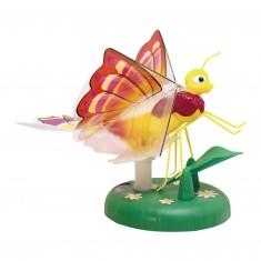 Lily papillon : Zinnia