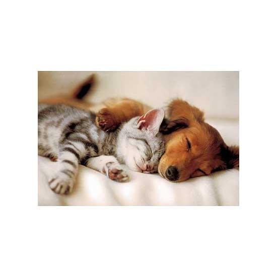 Puzzle 100 pièces - Chat et chien endormis - Trefl-16138
