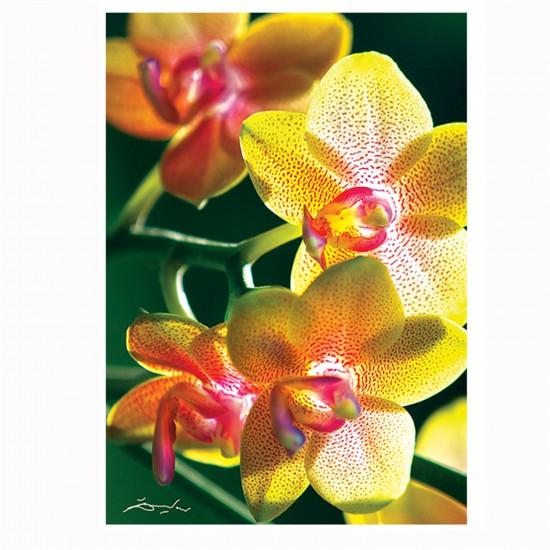 Puzzle 1000 pièces : Nature Limited Edition : Orchidée - Trefl-10503