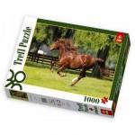 Puzzle 1000 pièces - Cheval au galop