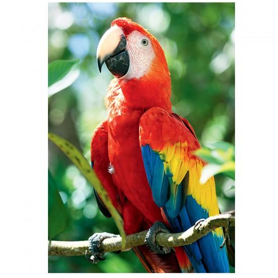 Puzzle 1000 pièces Nature Limited Edition : Perroquet, Honduras - Trefl-10516