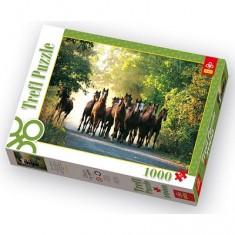Puzzle 1000 pièces - Promenade des chevaux