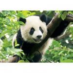 Puzzle 500 pièces - Panda géant