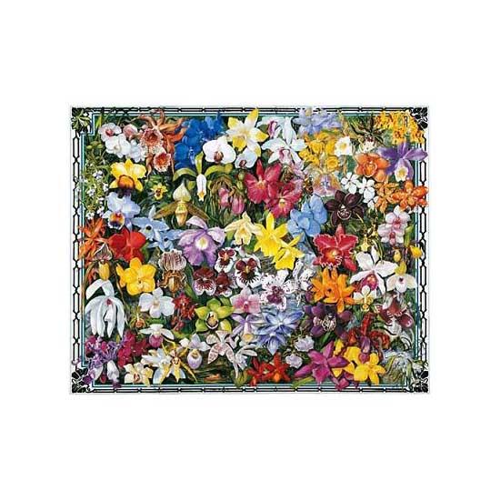 Puzzle 1000 pièces - Les orchidées - White-284