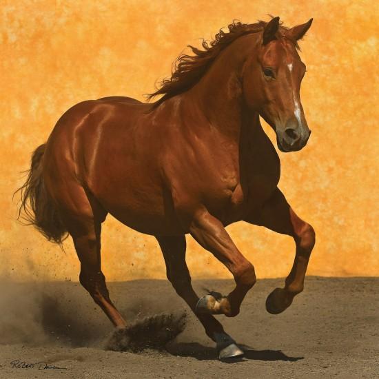 Puzzle 1024 pi ces carr cheval au galop puzzle anatolian rue des puzzles - Comment dessiner un cheval au galop ...