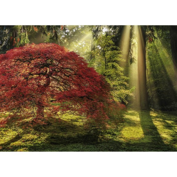Puzzle 1000 pièces : Guiding light - Heye-29855