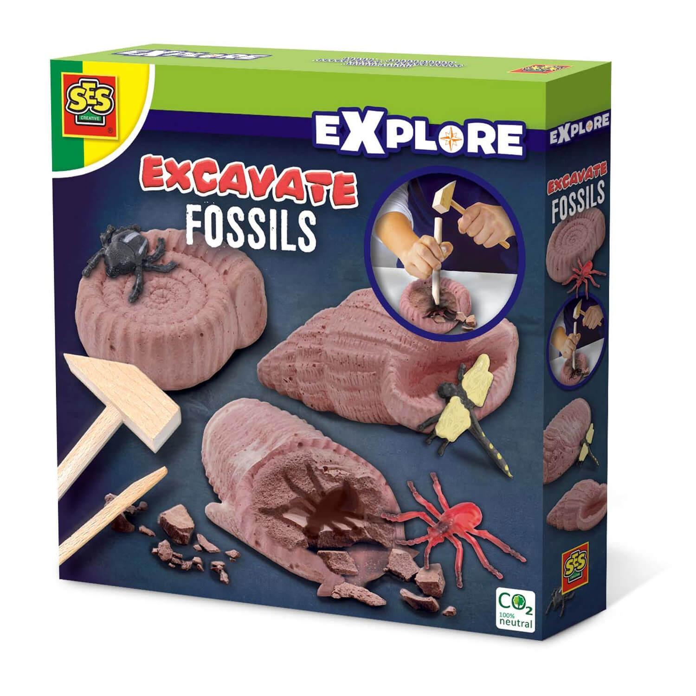 Découvre des fossiles