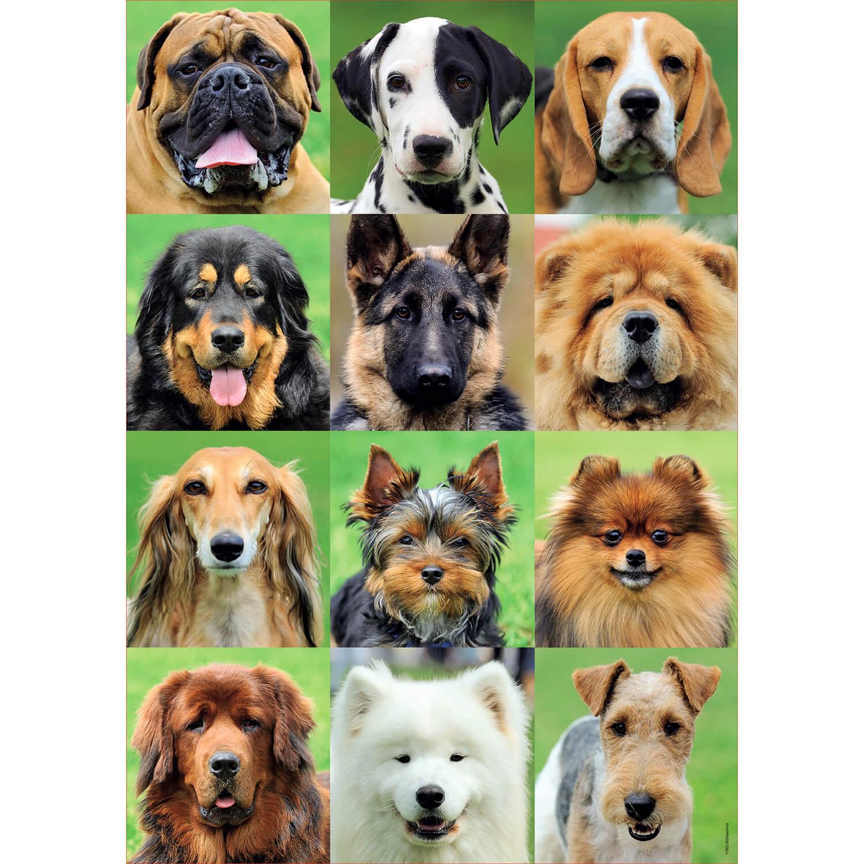 Puzzle 500 pièces : Collage chiens