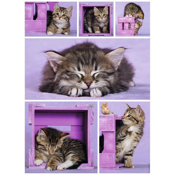 Puzzle 500 pièces : Chatons mignons - Nathan-Ravensburger-87227
